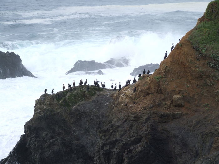 Birds lined up on upper california coast outcroping