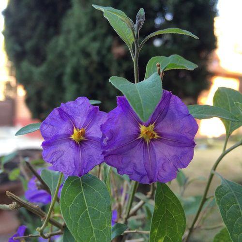 Pequeñas flores de gran belleza😊 Flowers, Nature And Beauty Miniature Flower Collection Flowers,Plants & Garden NaturalBeauty Flowers