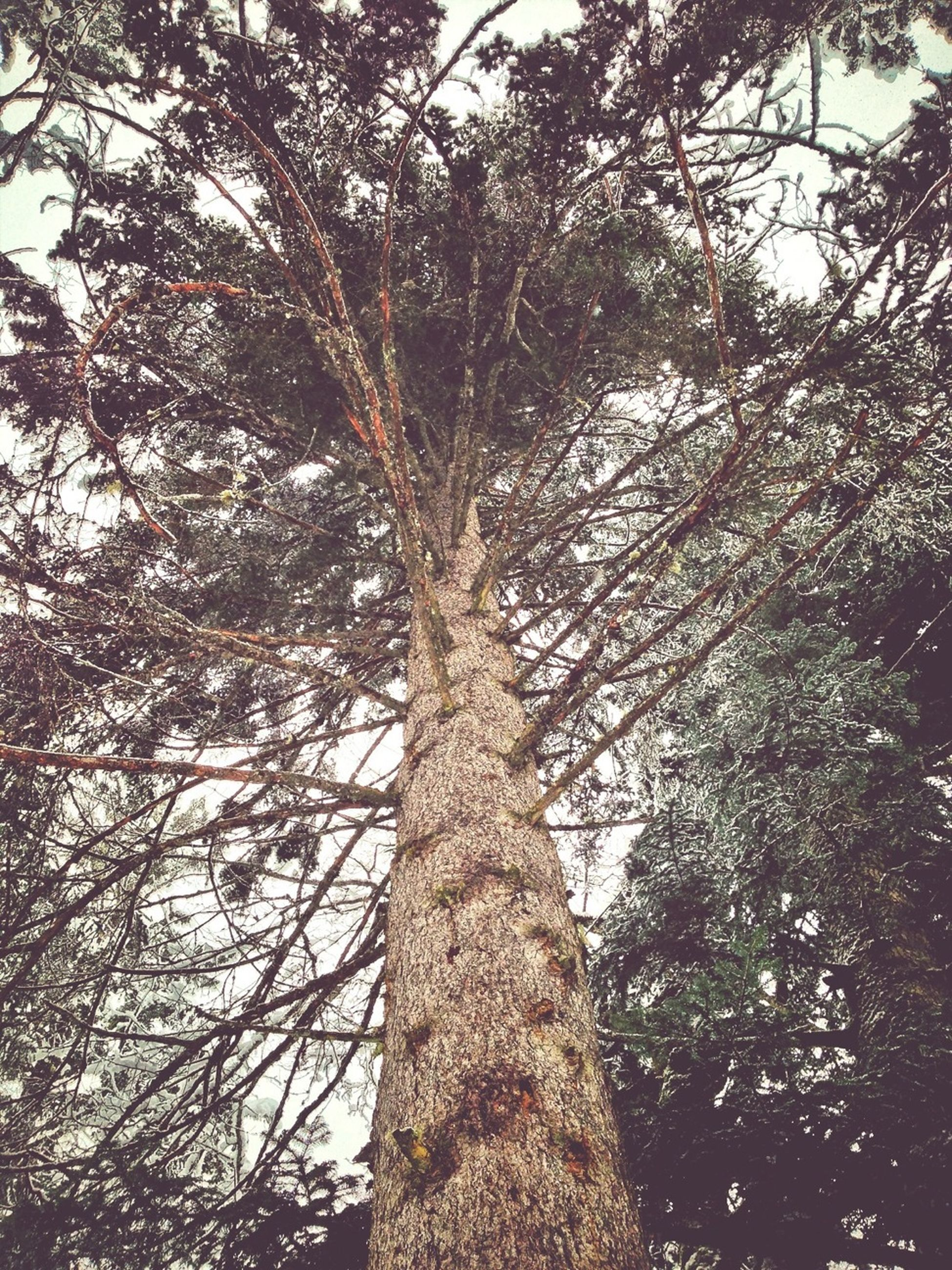 tree, low angle view, tree trunk, branch, growth, tranquility, nature, forest, sky, beauty in nature, woodland, day, outdoors, bare tree, no people, scenics, tranquil scene, backgrounds, tall - high, full frame