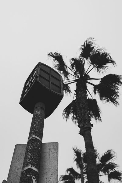 Low Angle View Palm Tree Building Exterior Built Structure Architecture Clear Sky Tree Outdoors Growth No People Blackandwhite Nature Streetphotography Xpro1 Fujifilm Beachlife Lamp City Life Sky Day