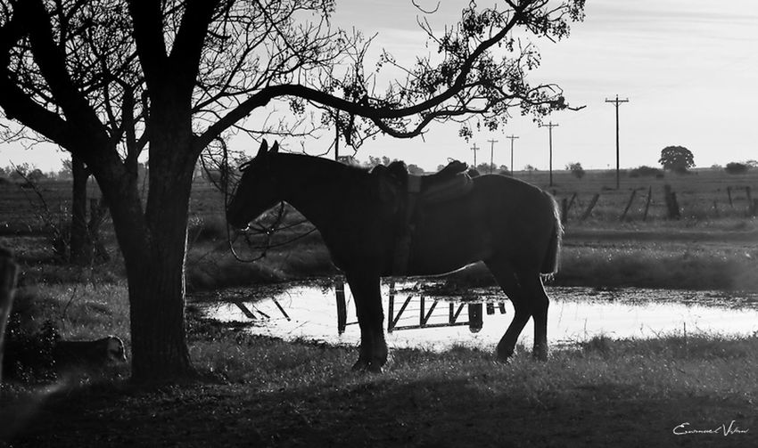 Argentina Photography Blackandwhite Photography Campo Argentino Clear Sky Field Gaucho Argentino Gauchos Hombre De Trabajo Horse Man And Horse Nature Trabajo De Machos  Trabajo Duro Tranquil Scene Vidagaucha