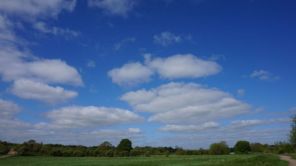 Green Green Green!  Trees In The Distance Green Grass 🌱 Blue Sky White Fluffy Clouds Cottoncandyclouds Clouds And Sky Green Pathways Green Clouds