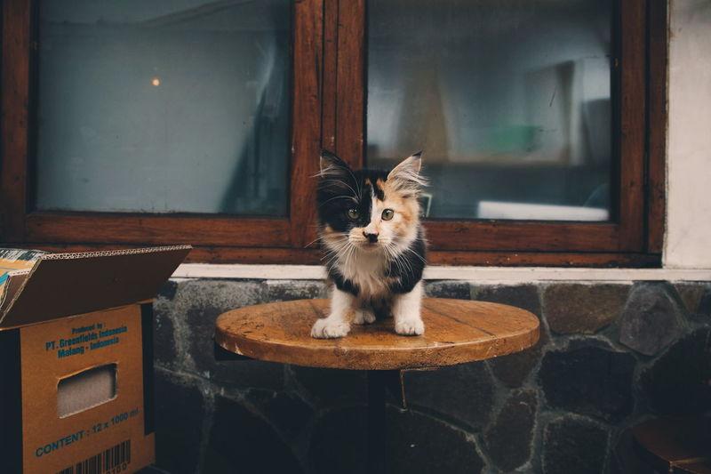 deathstroke! Cat Cat Lovers Dccomics Antihero The Street Photographer - 2016 EyeEm Awards