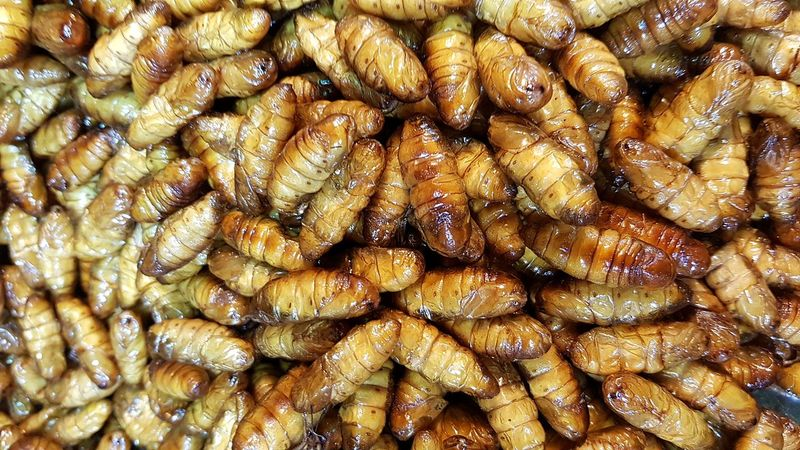 Silk worm pupae fried Silkworms Pupae Cocoon Food Localfood Insects Fried
