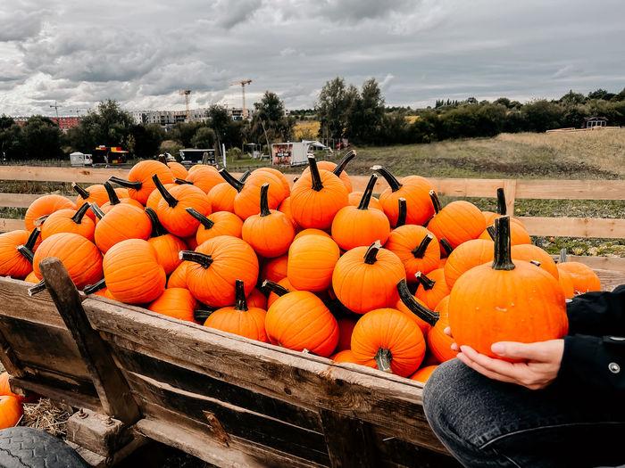 Orange pumpkins in park