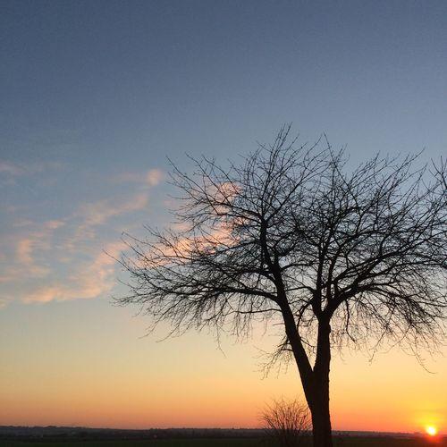 Tree Sunset Winter
