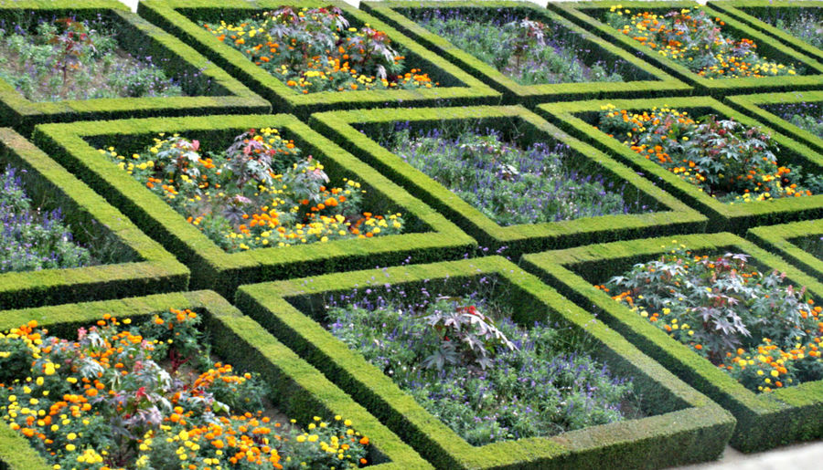 Beauty In Nature Day Flower Formal Garden Green Green Color Growth No People Outdoors Paris Sculpted Garden