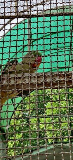 Low angle view of parrot in cage
