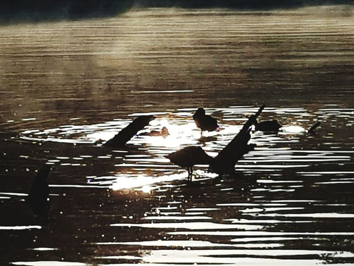 Beauty In Nature Nature Nature Photography Nature_collection Enten Morning Light Morning Morgenstimmung See Seelandschaft Seascape Sealife Sea Naturephotography Water Bird Puddle Lake Flood Wet Reflection Torrential Rain Swimming Weather