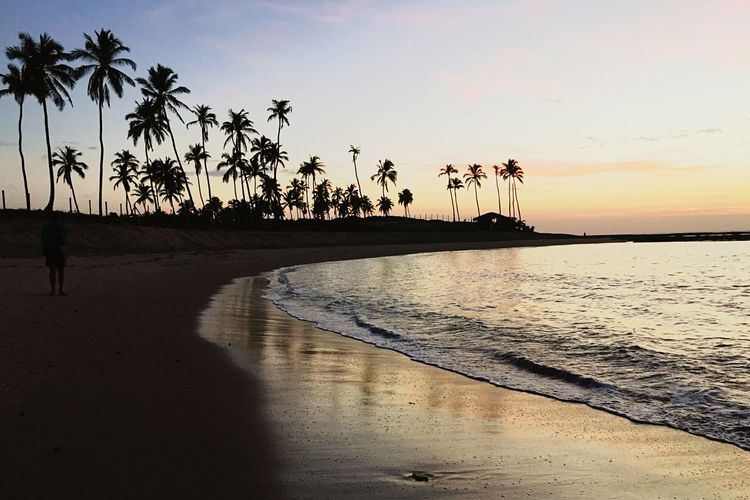 Palm Tree Water Sunset Beach Sea Beauty In Nature Sky Nature Tree Scenics Tranquil Scene Silhouette Tranquility Reflection Vacations Sand Outdoors Horizon Over Water Clear Sky
