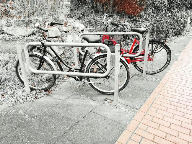 Check This Out two Bycicles in Black And White With A Splash Of Colour Red Eye4photography  Bycicle Unites Bycicle Lovers Bycicle Parking Bycicle Art Outdoors No People Bicycle Rack Bicycle Bycicle Photography Bycicle Day Transportation Fresh On Eyeem  Adapted To The City Lieblingsteil