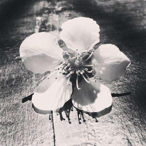 #flower Vscocam Whpflowerpower Whpuniqueportraitsoflove Flower