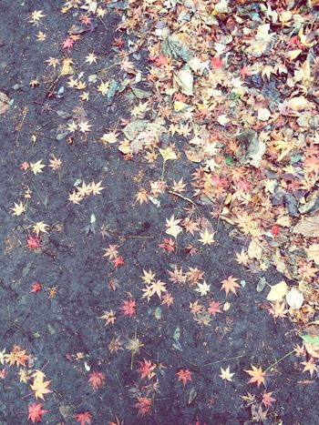 Fallen Leaves Fall Fall Leaves Fall2014 IPhoneography Nature