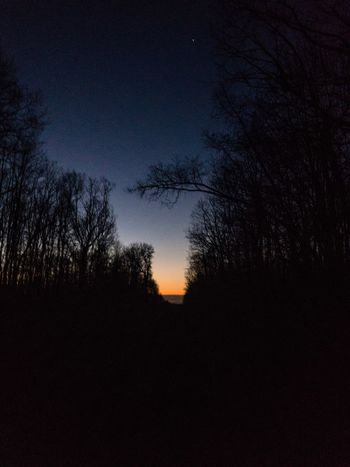 Sunrise in the woods Tree Tranquil Scene Silhouette Tranquility Nature Beauty In Nature Scenics Sky Sunset Idyllic No People Star - Space Outdoors Star Field Astronomy Landscape Night Branch