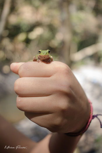 Rana Ranas❤ Frog One Animal Nature Day Verde Green Agua Water Pose Canon T6i Color Verde No People Nature Green Color Canon T6i Camera Mano Hand