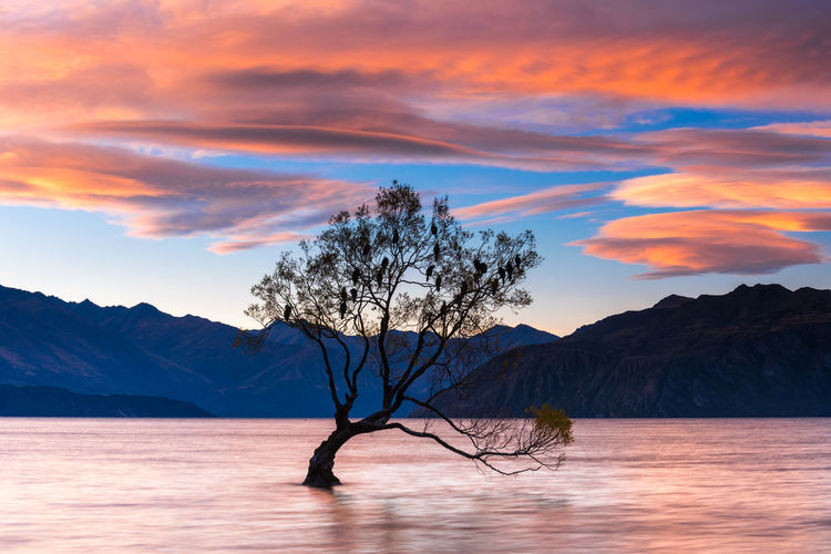 "Sun Rises at That Wanaka Tree. © 2016 Hafiz Ismail (ccig) Accredited Commercial Photographer by <a href=""http://www.ccigmalaysia.com"" rel=""nofollow"">www.ccigmalaysia.com</a> <a href=""http://www.imagesbyhafiz.com"" rel=""nofollow"">www.imagesbyhafiz.com</a> 