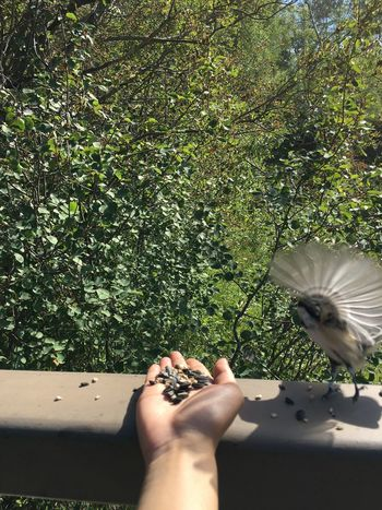 Animal Wildlife Animals In The Wild Beauty In Nature Bird Chickadee Close-up Day Flower Flower Head Fragility Freshness Green Color Growth Holding Human Body Part Human Hand Nature One Animal One Person Outdoors Perching Spread Wings Sunlight Tree Women The Week On EyeEm