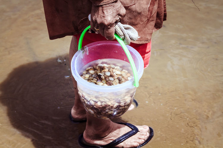 Close-up of person holding shellfish in bucket