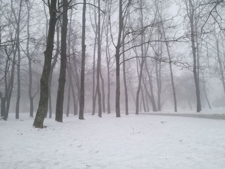 Snow Winter Tree Cold Temperature Nature Forest Beauty In Nature WoodLand No People Fog Silence Landscape