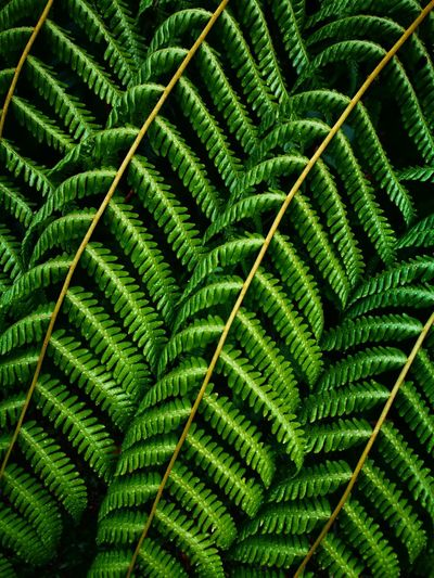 Full frame shot of fern leaf
