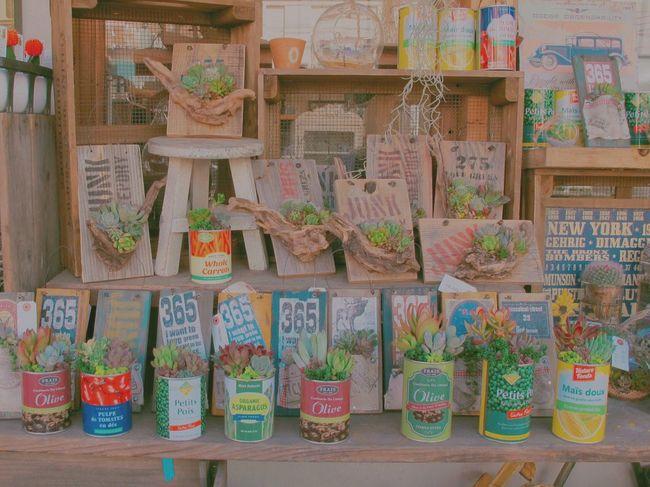 Up Close Street Photography Urban Spring Fever Showcase April Spring Japan OSAKA Cactus Flower サボテン 🌵