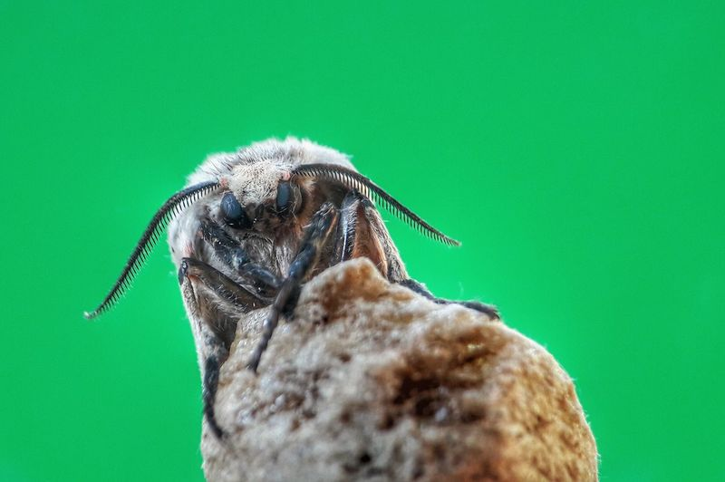 Close-up of an insect over green background