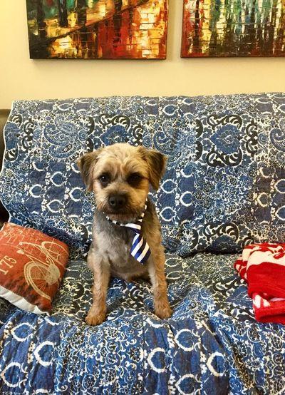 Ollie ready for
