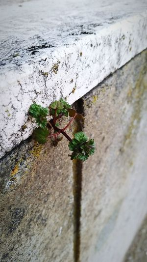 Macro Beauty Concrete Opens To Life Nature Efforts Natural Life Here Belongs To Me Nature's Diversities
