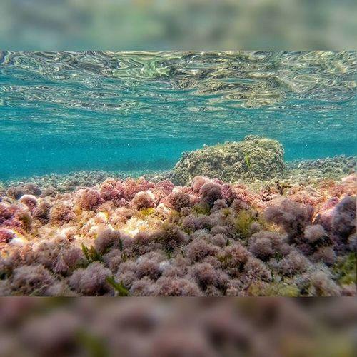 Immersion Sea Water Ocean Blue Ripple Ripples Gorgeous Nature Beautiful Oceano Onda Seascape Ignaturale