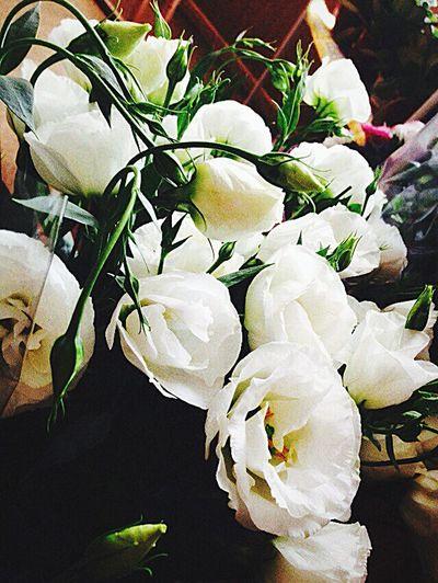 китайская роза White White Only White My Flowers My Plants 🌱