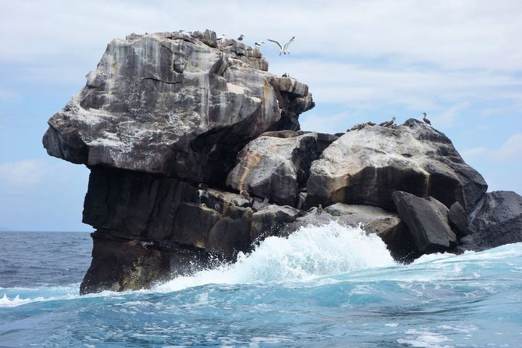 Birds Cliff