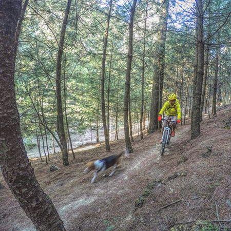 🚵🐶🌳 Gopromx Beaglesofinstagram Titathebeagle Outdoor Montañasmx Adidasoutdoor Sannicolastotolapan Gopropet Goprobike Ajusco MTB Gopro Fansalubike