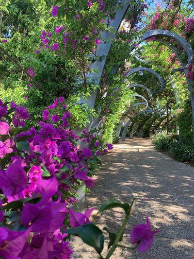 Pink flowering plants at park