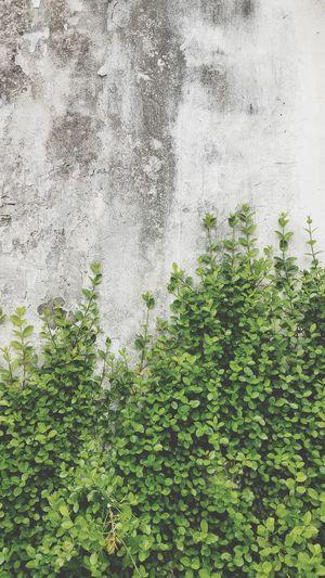 Growth Freshness