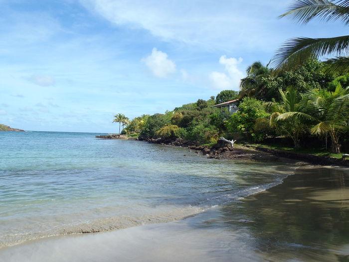 Saint Barth Beach Water Sea Tropical Climate Sand Island Travel Destinations Tranquil Scene Palm Tree Tourism Vacations Saint Barthélémy île Vacances Ciel Plage