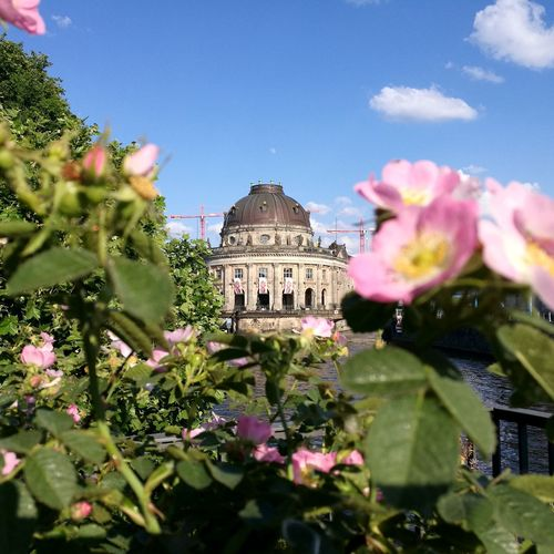 Summer in Berlin Bodemuseum Staatlichemuseen Berlin Berliner Ansichten Berlin Photography Berlin Love City Flower Ancient Civilization History Old Ruin Ancient Architecture Close-up Building Exterior Sky Blooming