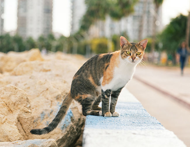 Portrait of cat sitting on retaining wall