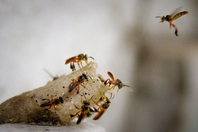 Working Bees Canon Canonphotograpy Macrophotography Macrolens Macrolove Macroworld Macronature Instanature Uniquemoments Natureshots LoveNature Naturephotography Macro Photography Bees Beesofeyeem Insect Animals In The Wild Animal Themes Animal Wildlife One Animal Ant Bee