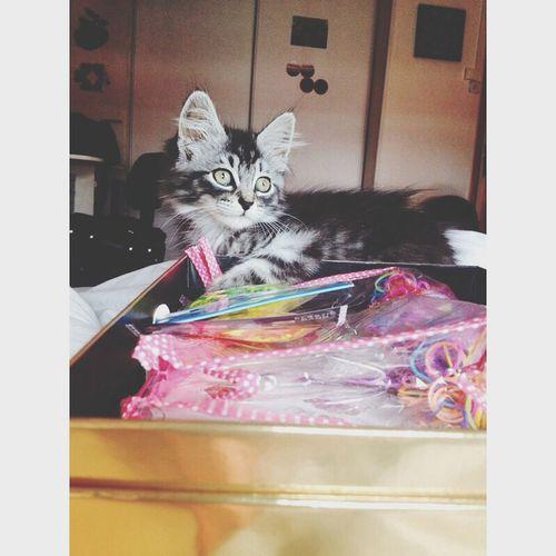 Tigresse my cat? My Perfect Cat, Gorgeous Animals Love♡