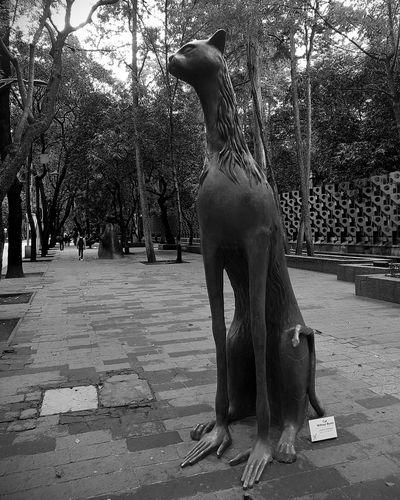 Sculpture Leonoracarrington Mexico Mexico City Cat