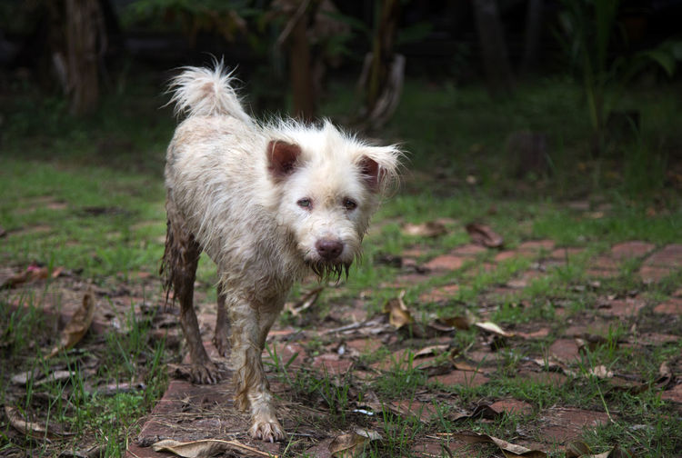 Dirty stray dog walking on street after rain in animal health care