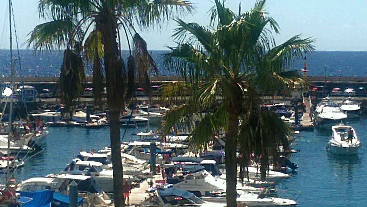 palm tree, sea, beach, nautical vessel, water, transportation, moored, nature, harbor, outdoors, tree, travel destinations, scenics, mode of transport, vacations, day, tourist resort, tranquility, sailboat, beauty in nature, no people, yacht, horizon over water, sky