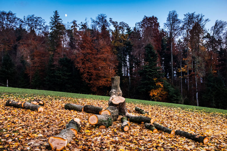 Tree Autumn Plant Change Nature No People Park Day Sky Tranquility Park - Man Made Space Leaf Grave Human Representation Scenics - Nature Growth Tranquil Scene Beauty In Nature Plant Part Outdoors