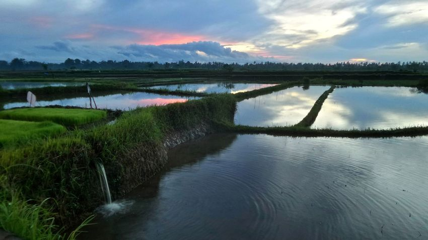 Membal Bali Bali Indonesia Island Islandlife Membalongcity Ricefield Ricefields Sunrise The Great Outdoors - 2016 EyeEm Awards