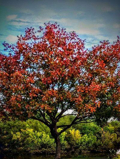 colors of fall Fallcolors