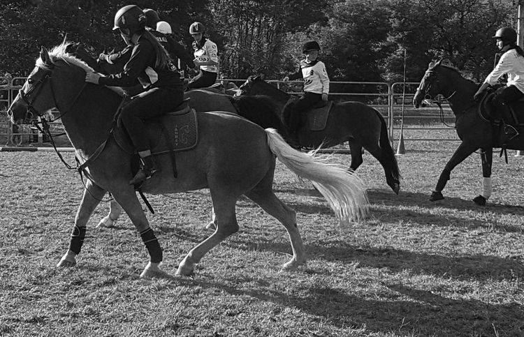 Country People Country Life Horse Carousel Horse Horses Blackandwhite Outdoors Domestic Animals Real People Countryfair Day Nature Horserider Horseball Taking Photos Cellphone Photography Enjoying Life
