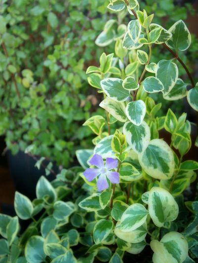 EyeEm Nature Lover Flower Collection Nature_collection Flowers,Plants & Garden Nature Flowerporn Flower 自然 花と庭 In My Garden