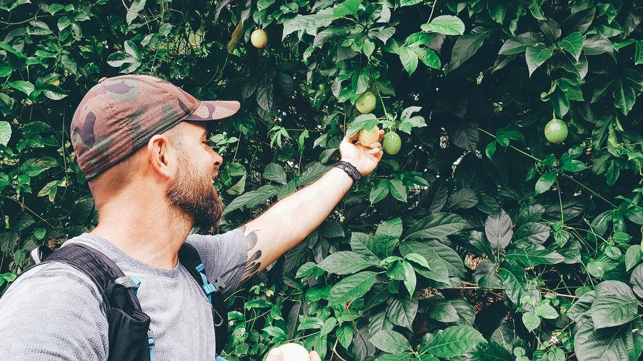Man holding fruits on tree
