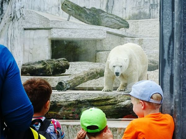Bear Zoo Zoology Zoo Animals  Zoophotography Zoopark Zooanimals ZOO-PHOTO