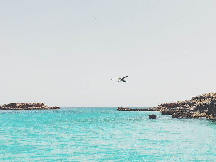 Bird Flying Over Calm Blue Sea